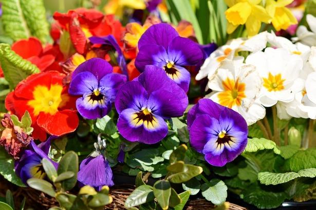В Старом Крюково подходит к завершению конкурс цветников